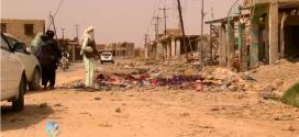 Taliban, Helmand